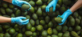 Axarfruit continúa adecuando sus instalaciones