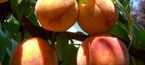 Cae la demanda y aumenta el valor en las exportaciones de frutas y hortalizas efectuadas hasta junio