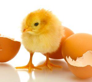 ¿Exceso de instalaciones avícolas en venta?