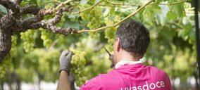 Uvasdoce prevé incrementar ventas, mientras sigue apostando por variedades con más valor