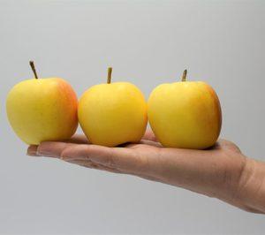 Nace un consorcio para desarrollar el mercado de la manzana como snack