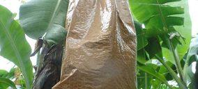 Smurfit Kappa lanza una solución sostenible para el cultivo de plátanos y bananas