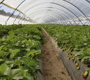 Life 4Doñana recibe 2,2 M€ para reducir un 20% el uso de agua en el cultivo de fresa