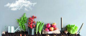 Informe 2020 sobre el sector de Frutas y Hortalizas en España