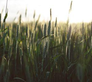 Europastry anuncia su compromiso de utilizar harina 100% sostenible