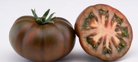 Agroponiente apuesta por el sabor con su nuevo tomate asurcado chocolate en exclusiva