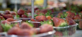 Fruta de Andalucía inicia la campaña 2020/2021 de berries con nuevas inversiones
