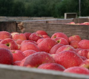 Finaliza, con éxito, la segunda campaña europea de la manzana SweeTango