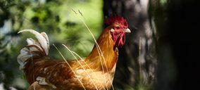 Splendid Foods abrirá una nueva planta para su marca de pollo ecológico y proyecta ya su ampliación