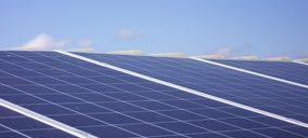 Lluch Essence apuesta por la sostenibilidad, mientras encuentra nuevas oportunidades