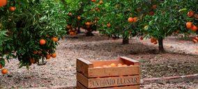 MCH Private Equity y SanLucar Fruit entran en el accionariado de Antonio Llusar y Cía