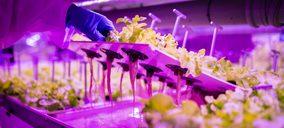 Agromediterránea presenta su nueva lechuga viva y sin tratamientos fitosanitarios