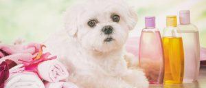 La higiene para mascotas capta el interés de nuevas empresas