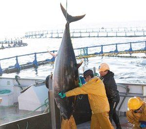 Grupo Ricardo Fuentes se focaliza en el atún rojo tras la venta de parte de sus activos acuícolas