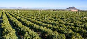 El limón europeo lidera la producción mundial durante 2020