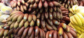 Alcampo incorpora plátano rojo de Canarias a sus centros