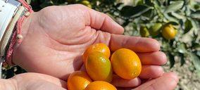 Campojoyma comienza a exportar kumquat bio
