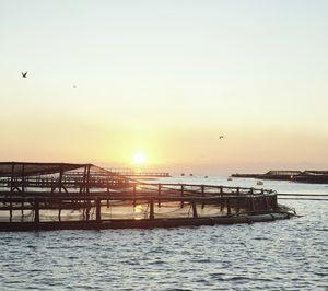 España se mantiene como el principal productor acuícola de la UE en volumen