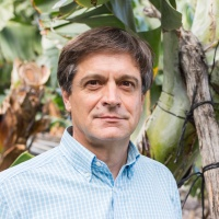 Domingo Martín (Asprocan): El sector del plátano en Canarias todavía atrae inversores, aunque de manera muy limitada