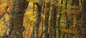 Naeco lanza su proyecto Naeco Reforest