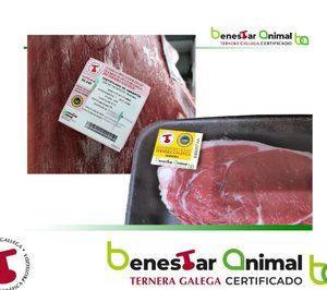 Nace la certificación de Bienestar Animal Ternera Gallega
