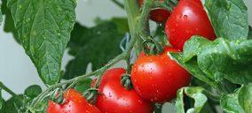Un productor almeriense de tomate acaba en concurso
