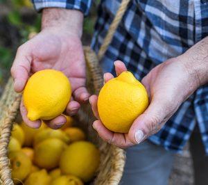 El limón lidera la superficie nacional dedicada al cultivo de cítricos ecológicos