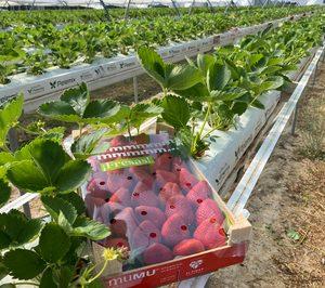 Una nueva marca irrumpe en el mercado nacional de berries de verano