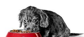 Royal Canin apuesta por sistemas de predicción de la demanda para mejorar su logística