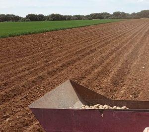 Interagro de Patatas prevé incrementar su volumen comercializado en 2021