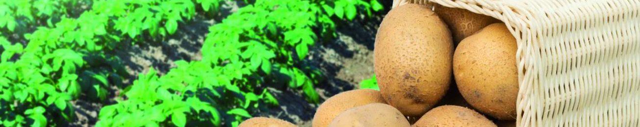 Informe 2021 del sector de Patata en España