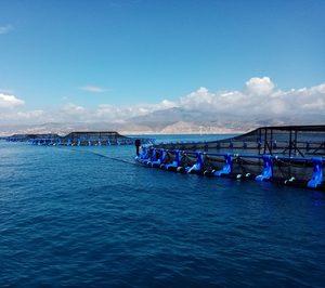 Avramar pone en marcha su granja marina en El Campello