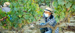Las exportaciones de vinos españoles recuperan dinamismo