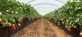 La fresa onubense cierra su campaña con una producción de 281.000 t
