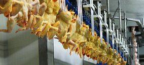 El precio de las materias primas pone de nuevo al sector avícola en alerta