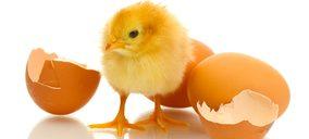 ¿Cómo son los consumidores de carne avícola?