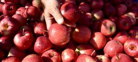 Aumentan las manzanas club y el segmento bío de VOG en la temporada 2021-2022