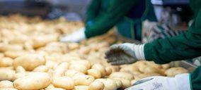Coop. Virgen del Rocío invierte en el cultivo de boniato