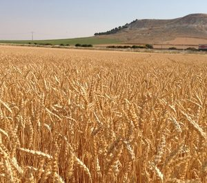 Nestlé se compromete con la agricultura regenerativa