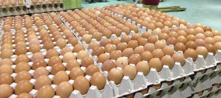 Avícola Velasco volverá a invertir en bienestar animal y sostenibilidad