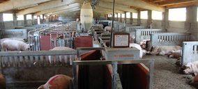 El sector porcino confía en repetir en 2021 los resultados del ejercicio anterior