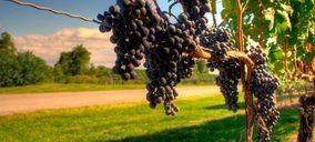 España recupera el liderazgo en el mercado mundial de vinos en volumen
